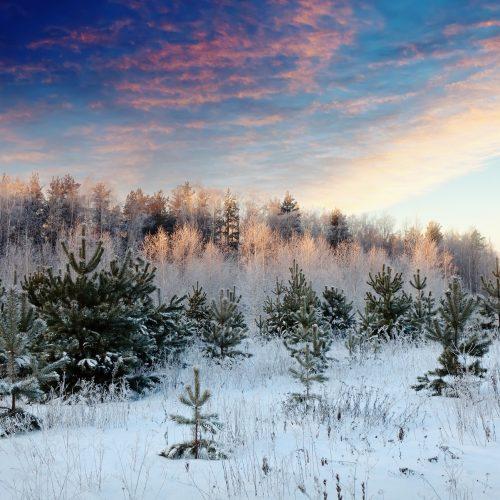 Krynica zima